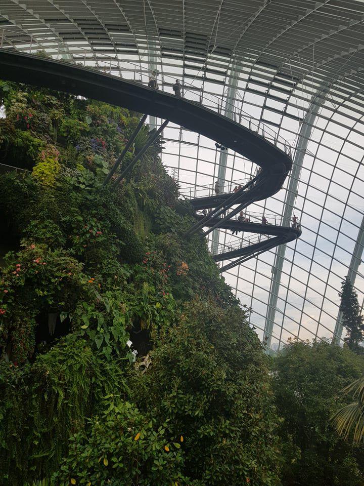 Rừng đám mây Singapore.jpg