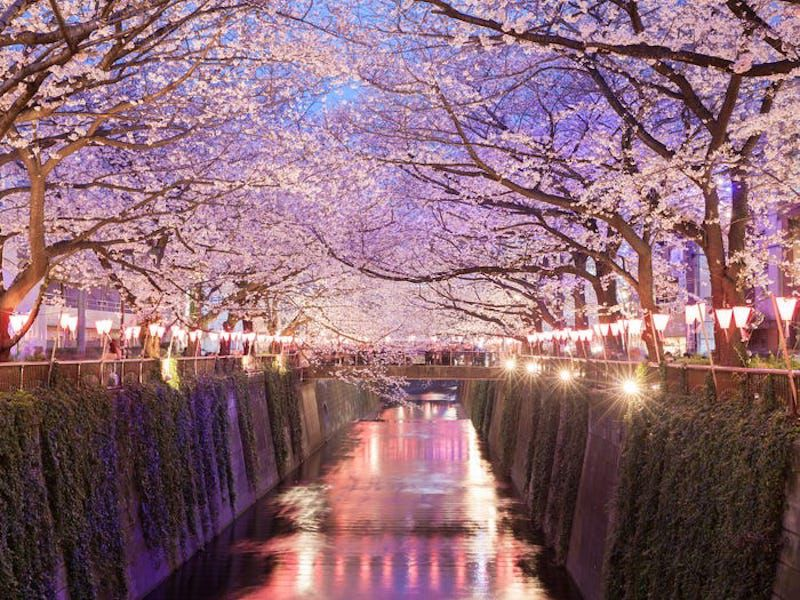 Tokyo là thành phố đẹp nhất thế giới và đây là lí do tại sao - 10