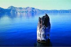 Khúc gỗ 'nổi trên mặt nước suốt trăm năm không phân hủy
