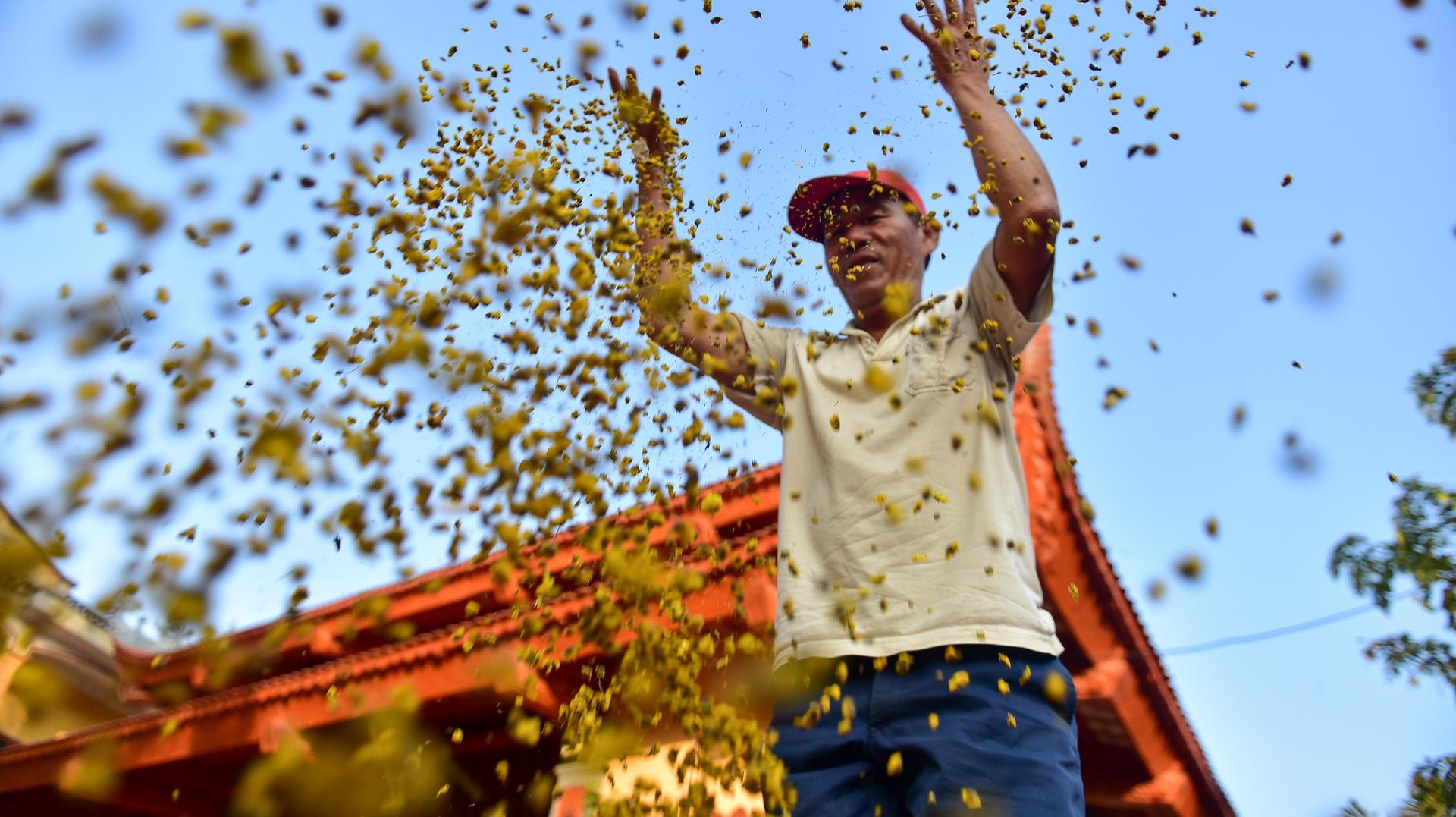 Ngắm cánh đồng cúc tiến vua vàng ruộm mộng mơ tại Nghĩa Trai, Hưng Yên - 16