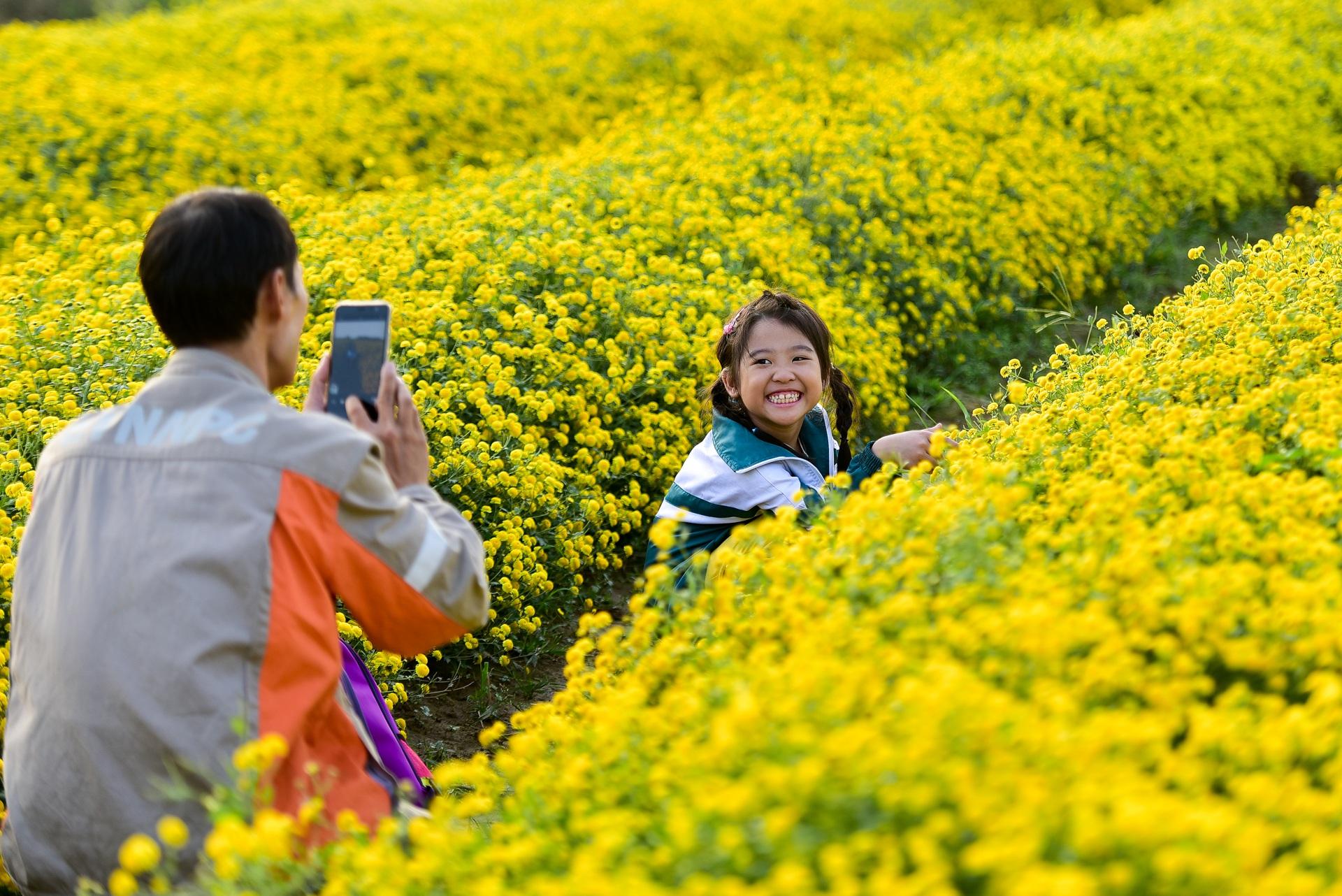 Ngắm cánh đồng cúc tiến vua vàng ruộm mộng mơ tại Nghĩa Trai, Hưng Yên - 1