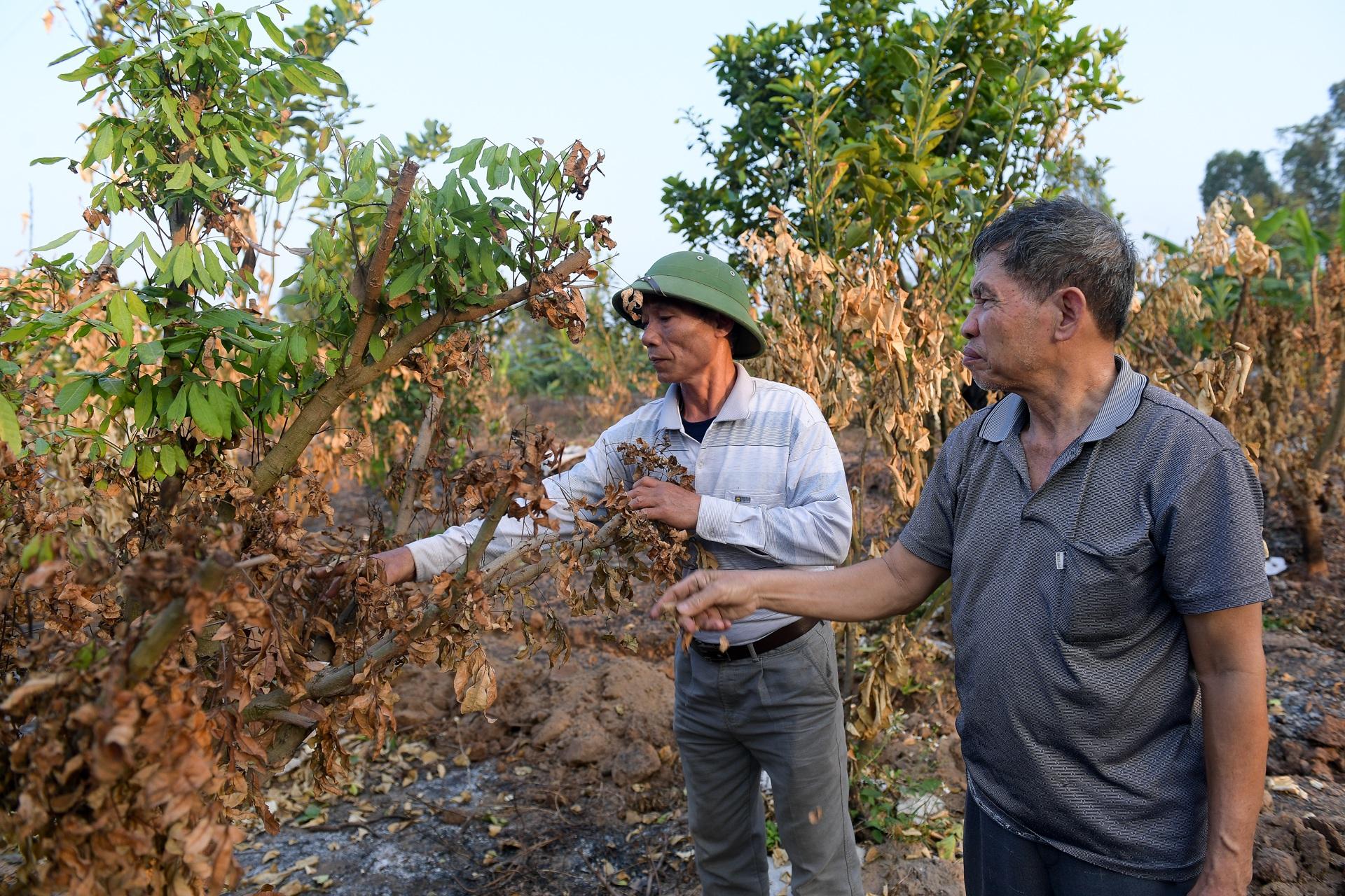 Nông dân Hưng Yên khóc hết nước mắt, nhìn vườn cây ăn quả bị đốt trụi - 10