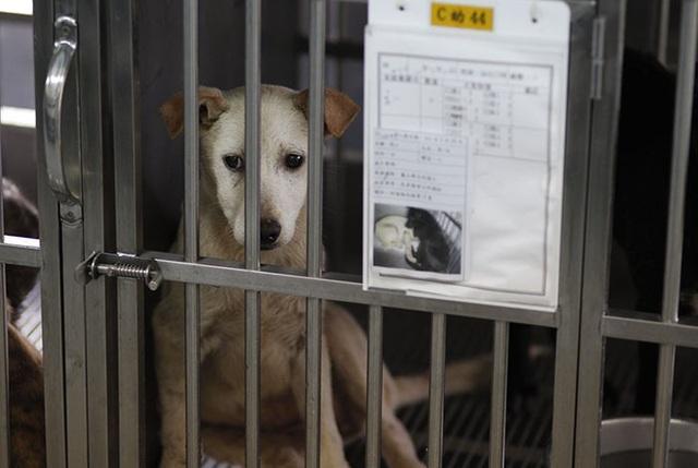 Nhóm khách Việt ngồi tù, bị phạt 770 triệu đồng vì giết hại và ăn thịt chó - 3