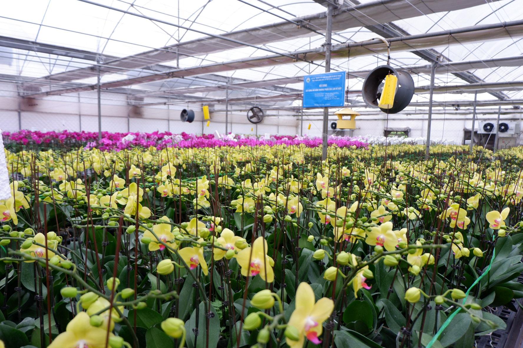 Người Việt ứng dụng 4.0 trồng lan: Hết thời hoa ngoại độc chiếm thị phần hồ điệp Tết - 5
