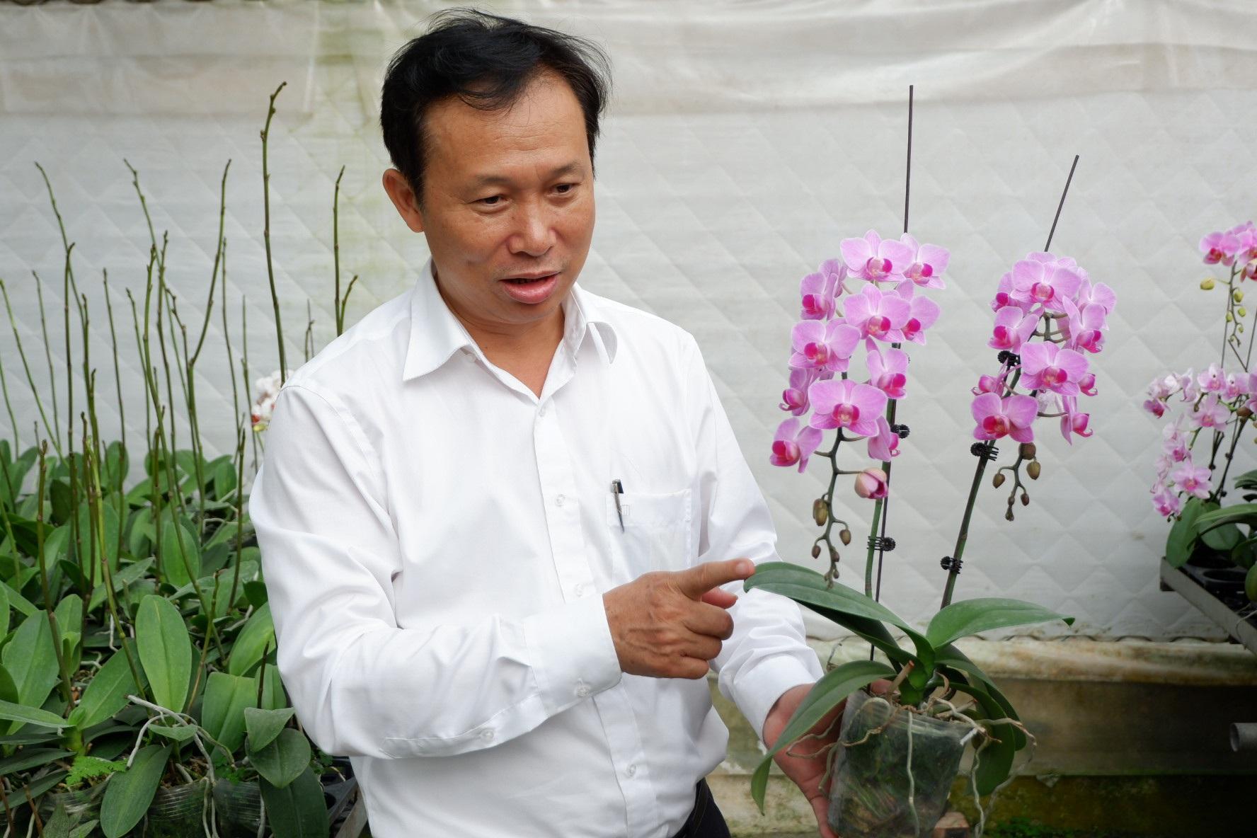 Người Việt ứng dụng 4.0 trồng lan: Hết thời hoa ngoại độc chiếm thị phần hồ điệp Tết - 3