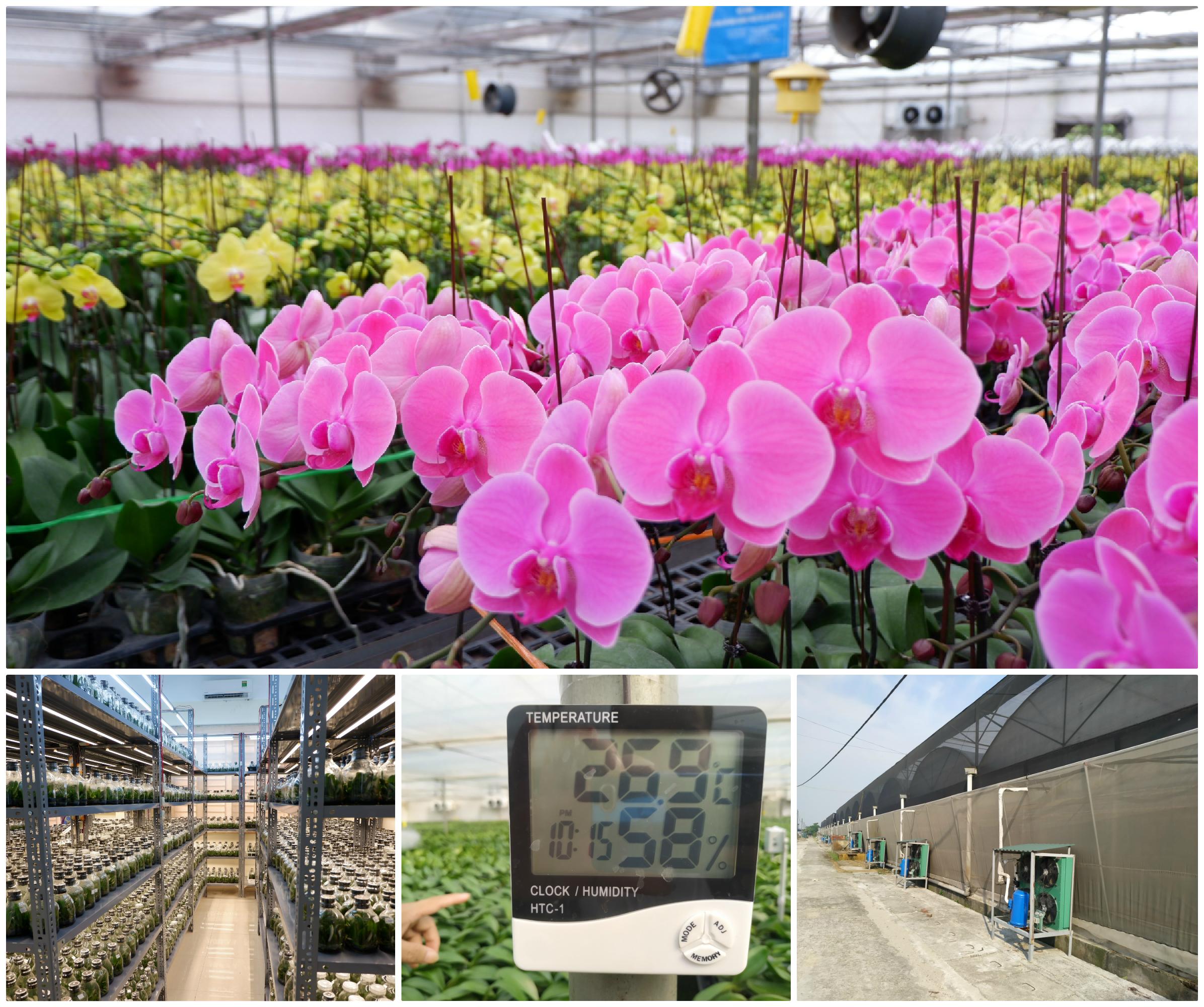 Người Việt ứng dụng 4.0 trồng lan: Hết thời hoa ngoại độc chiếm thị phần hồ điệp Tết - 1