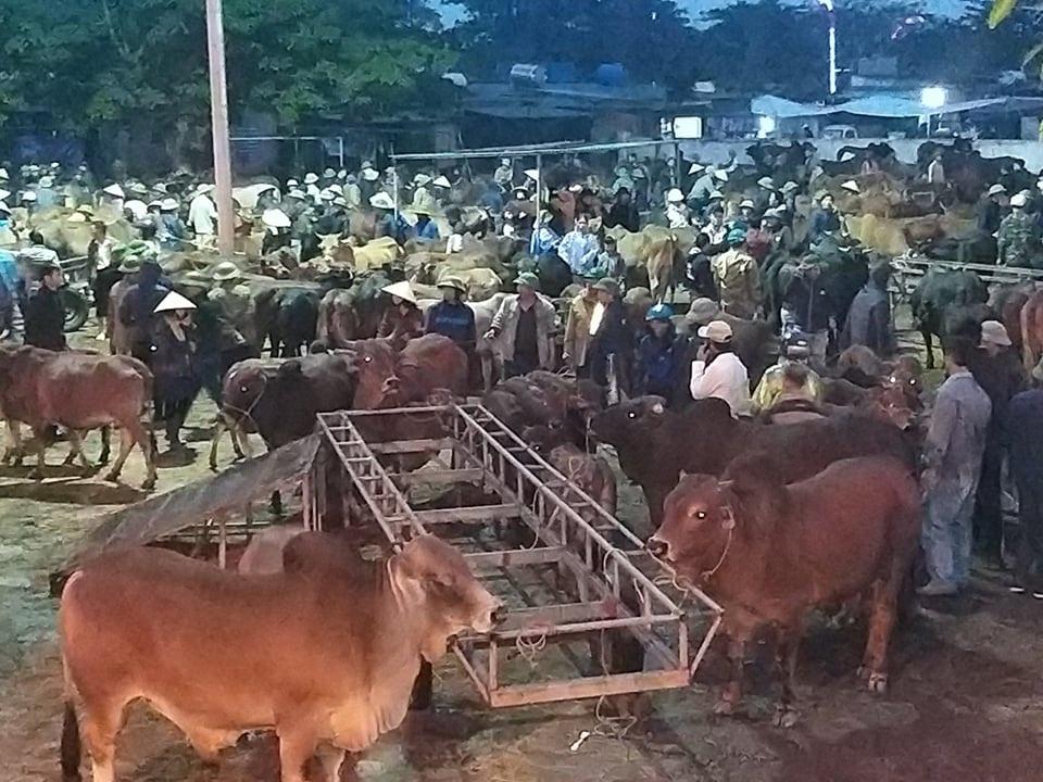 Nhộn nhịp phiên chợ trâu, bò lớn nhất miền Bắc - 5