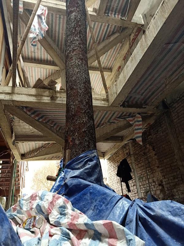 Chuỗi ngày không ngủ của ông chủ ngôi nhà gỗ 30 tỷ vừa tậu cặp cây khủng - 10