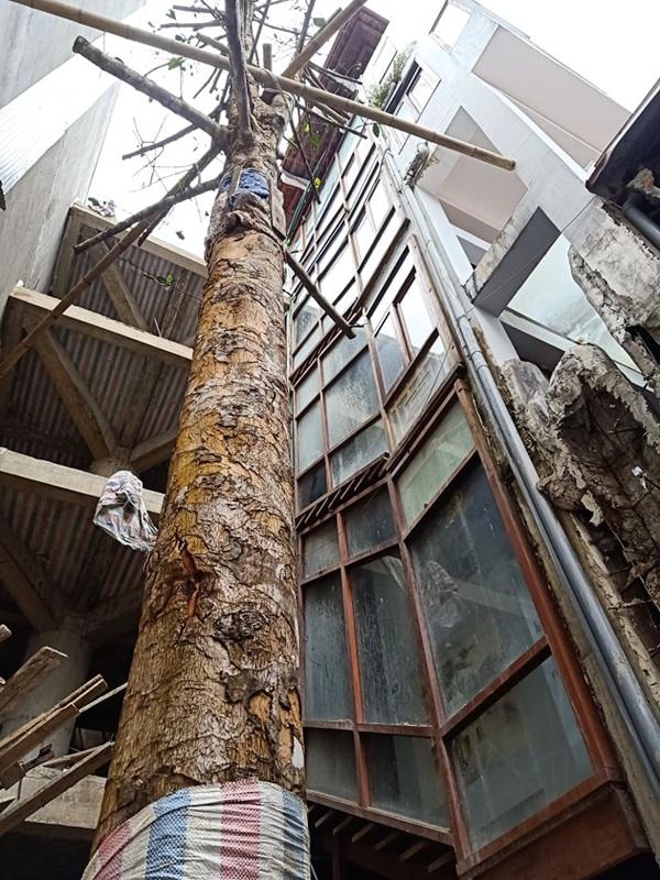 Chuỗi ngày không ngủ của ông chủ ngôi nhà gỗ 30 tỷ vừa tậu cặp cây khủng - 12