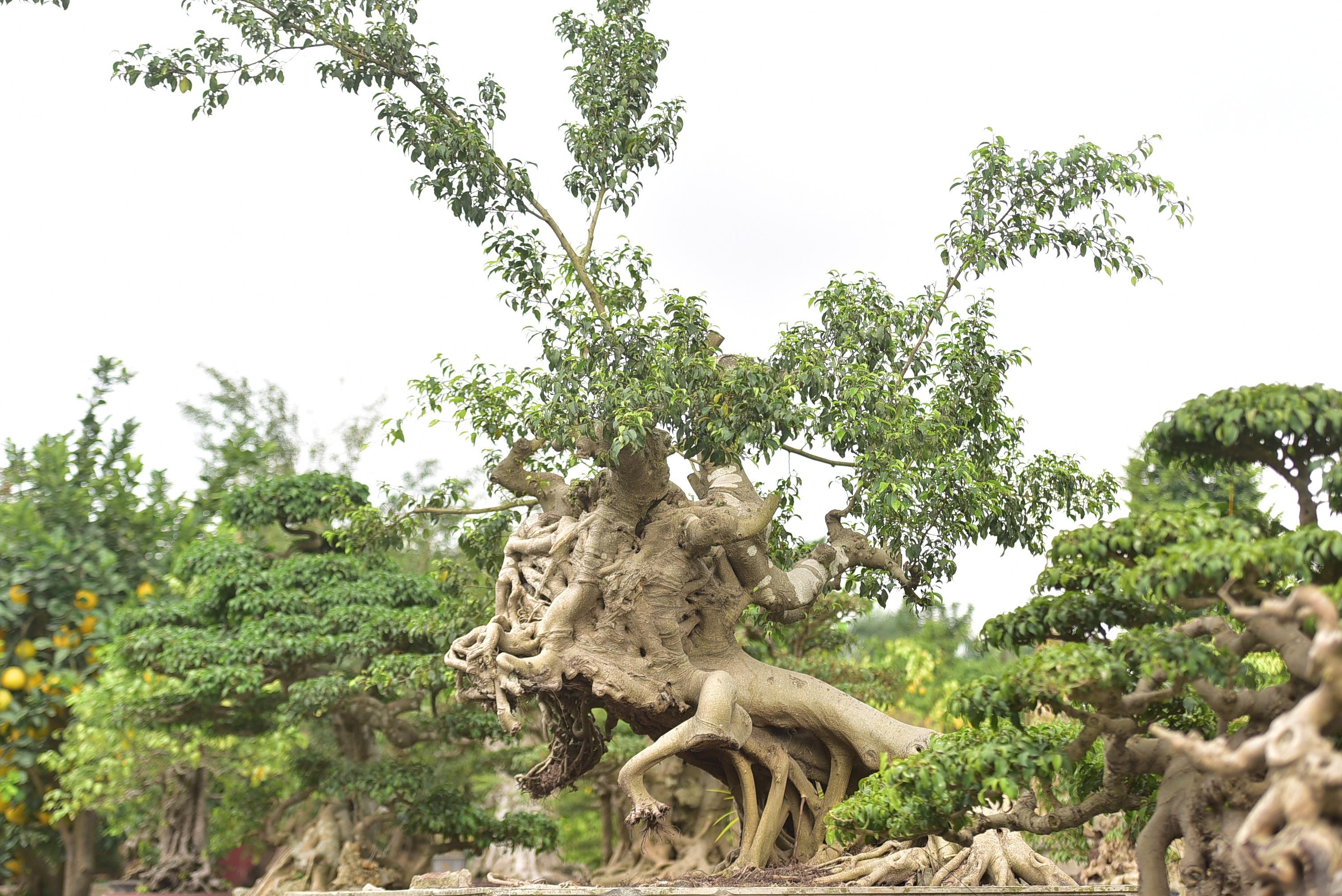 Hoa mắt trước khu vườn triệu đô của ông vua cây cảnh - 12