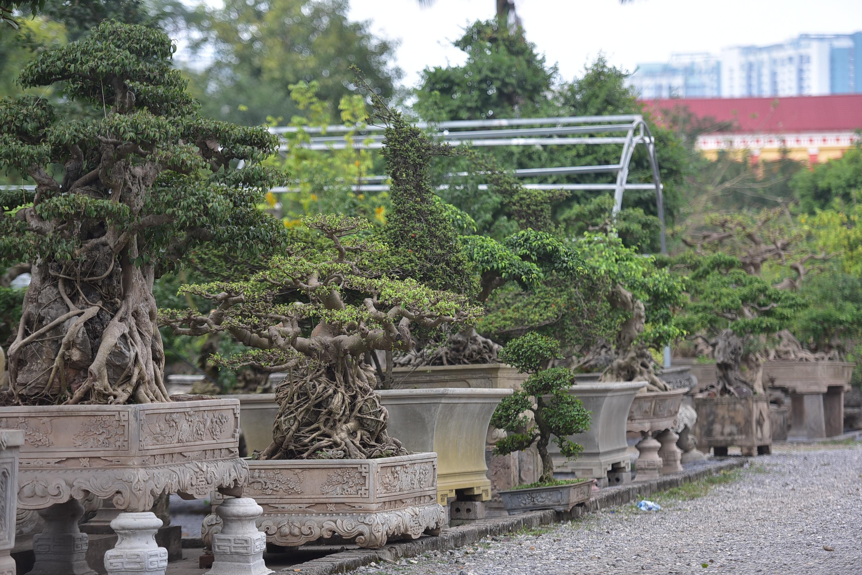 Hoa mắt trước khu vườn triệu đô của ông vua cây cảnh - 7