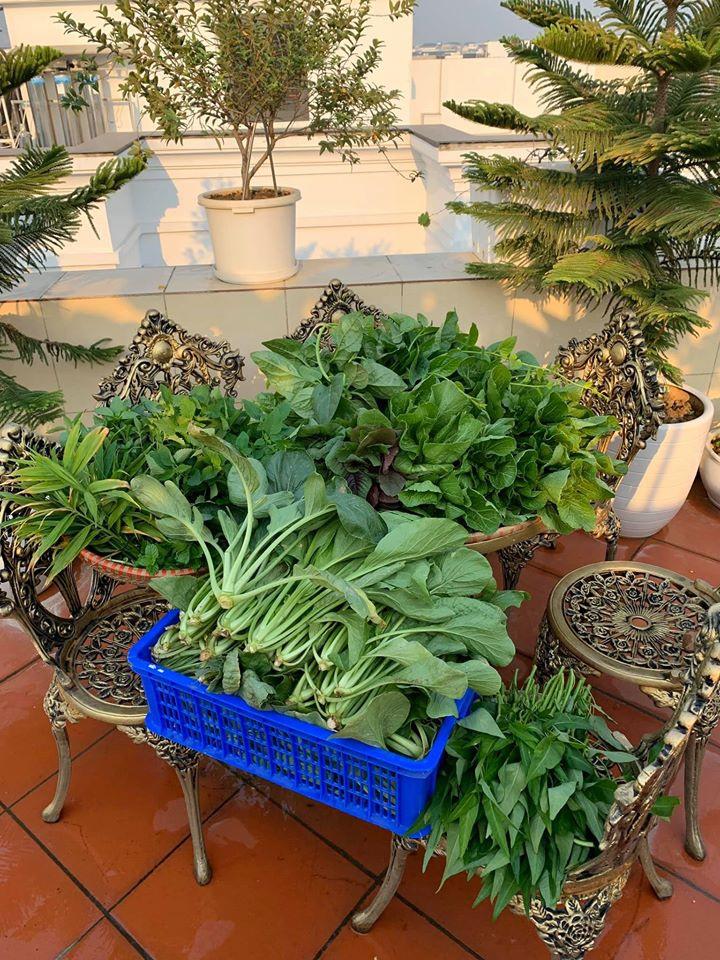 Mãn nhãn với vườn rau củ quả 4 mùa trên sân thượng 120m2 - 4