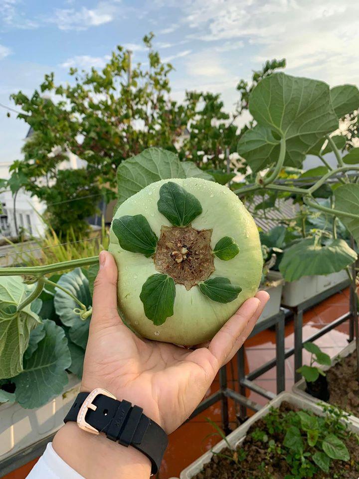 Mãn nhãn với vườn rau củ quả 4 mùa trên sân thượng 120m2 - 2