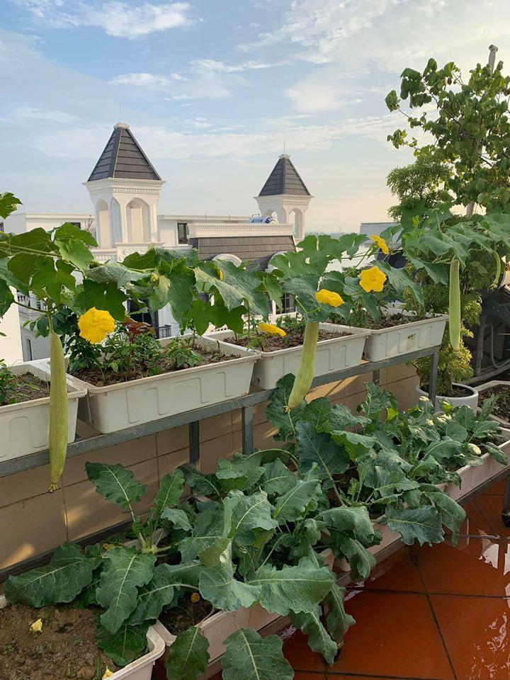 Mãn nhãn với vườn rau củ quả 4 mùa trên sân thượng 120m2 - 1
