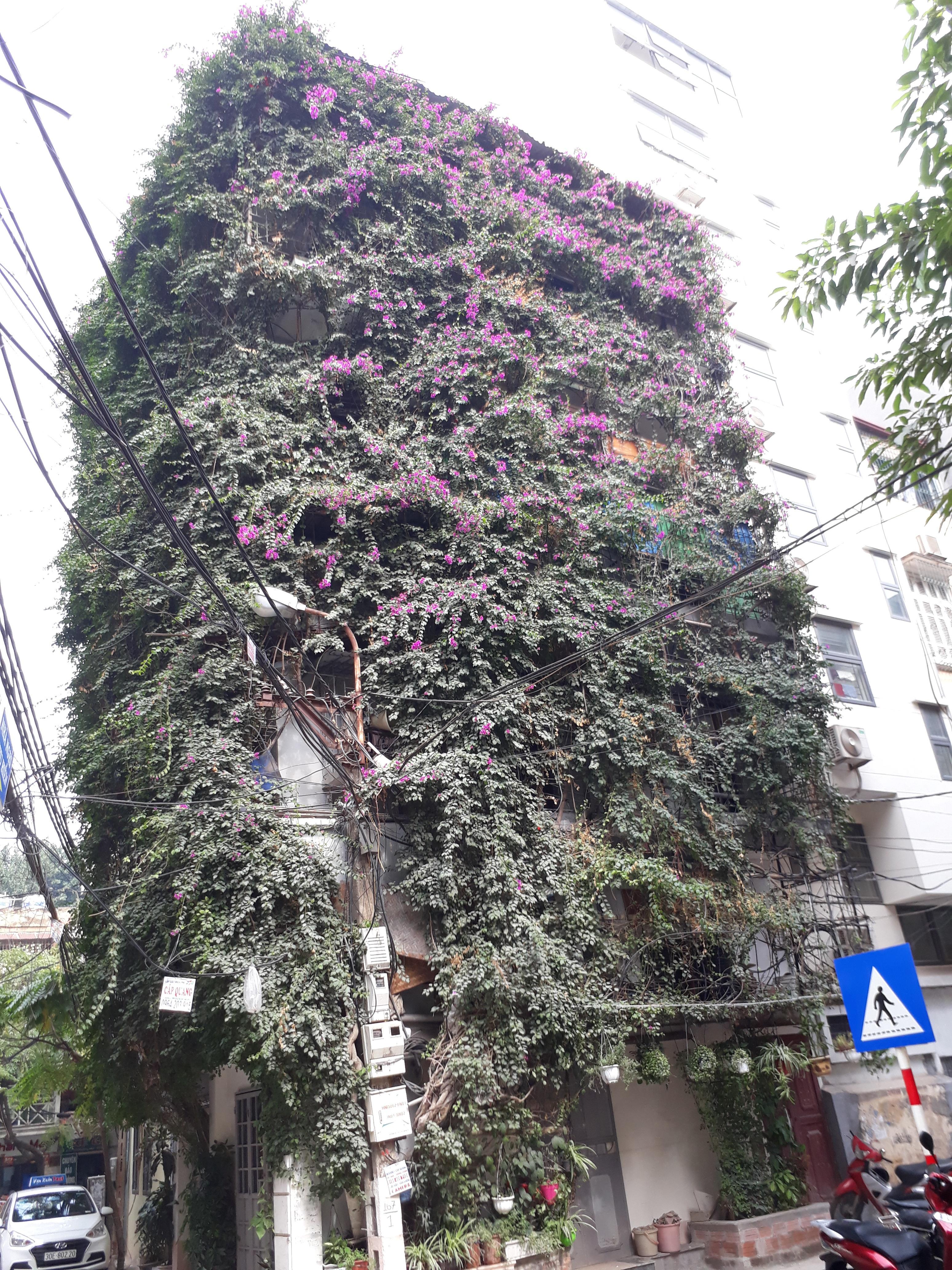 Nhà cây 5 tầng phủ kín hoa giấy ở Hà Nội, ai đi qua cũng dừng lại ngắm - 14