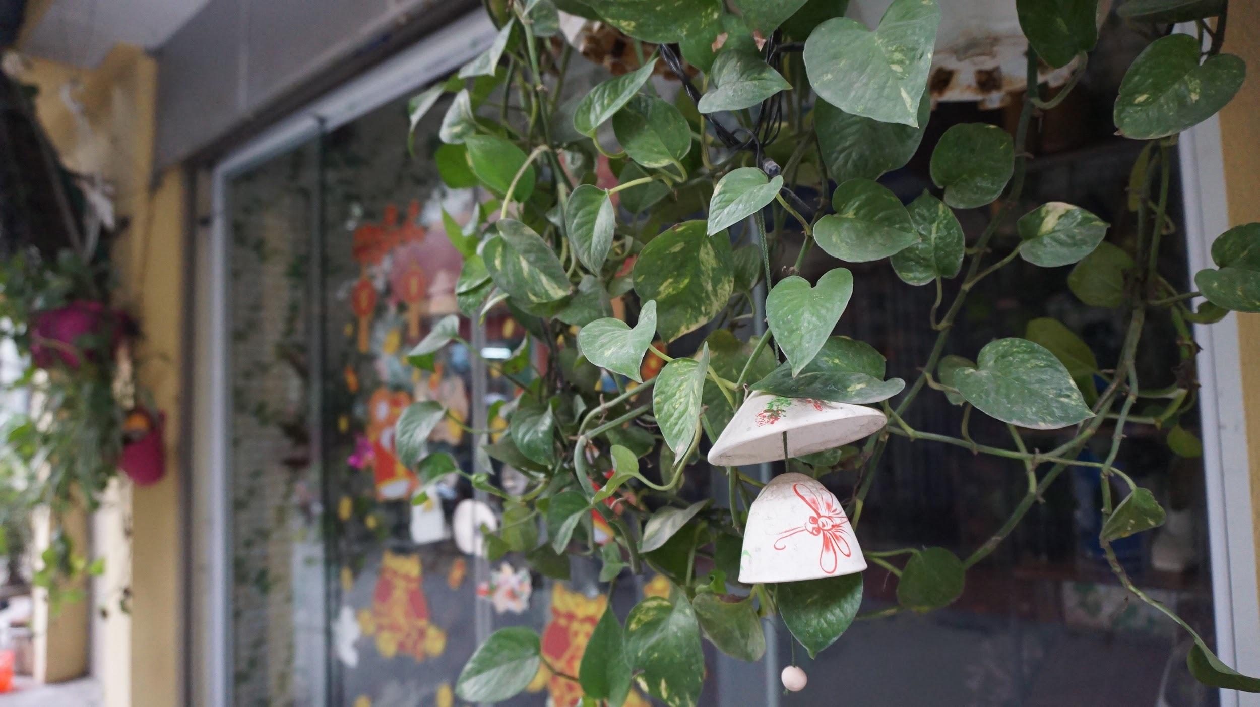 Nhà cây 5 tầng phủ kín hoa giấy ở Hà Nội, ai đi qua cũng dừng lại ngắm - 7