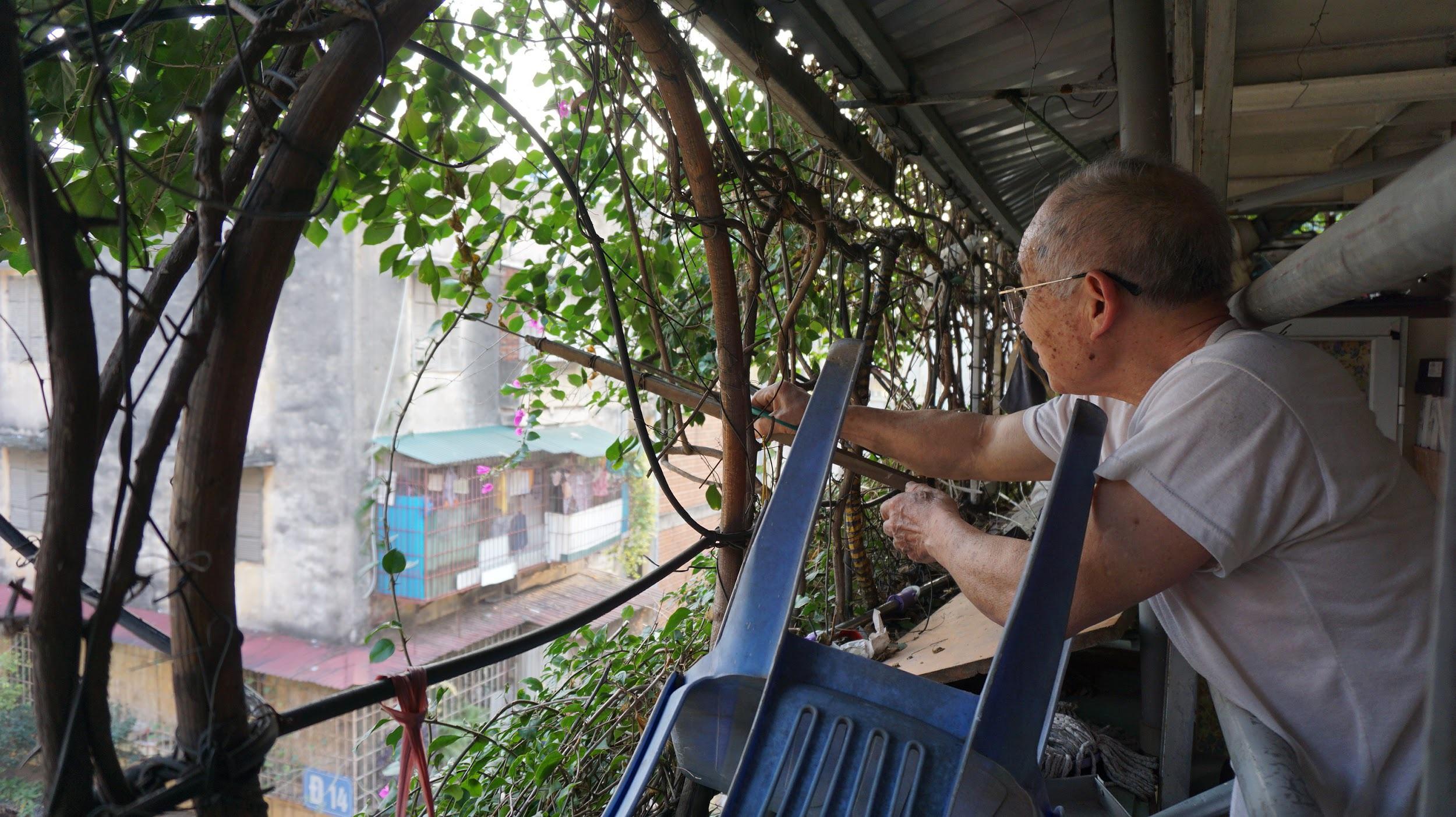 Nhà cây 5 tầng phủ kín hoa giấy ở Hà Nội, ai đi qua cũng dừng lại ngắm - 11