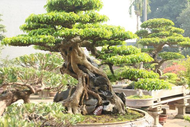 Lạc bước vào những khu vườn đắt giá như vàng ròng của các đại gia Việt - 7