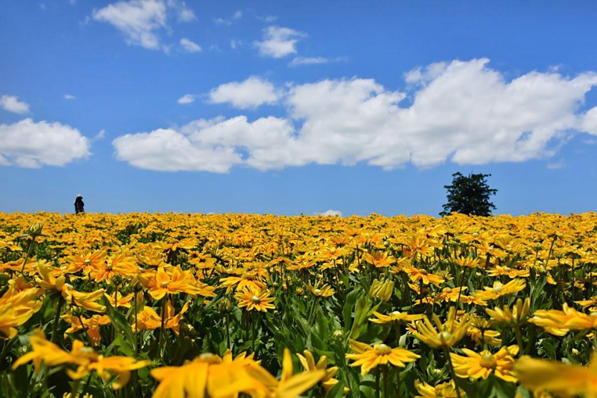 Đến nơi bốn mùa đều ngát hương hoa - 5