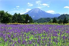 Đến nơi bốn mùa đều ngát hương hoa