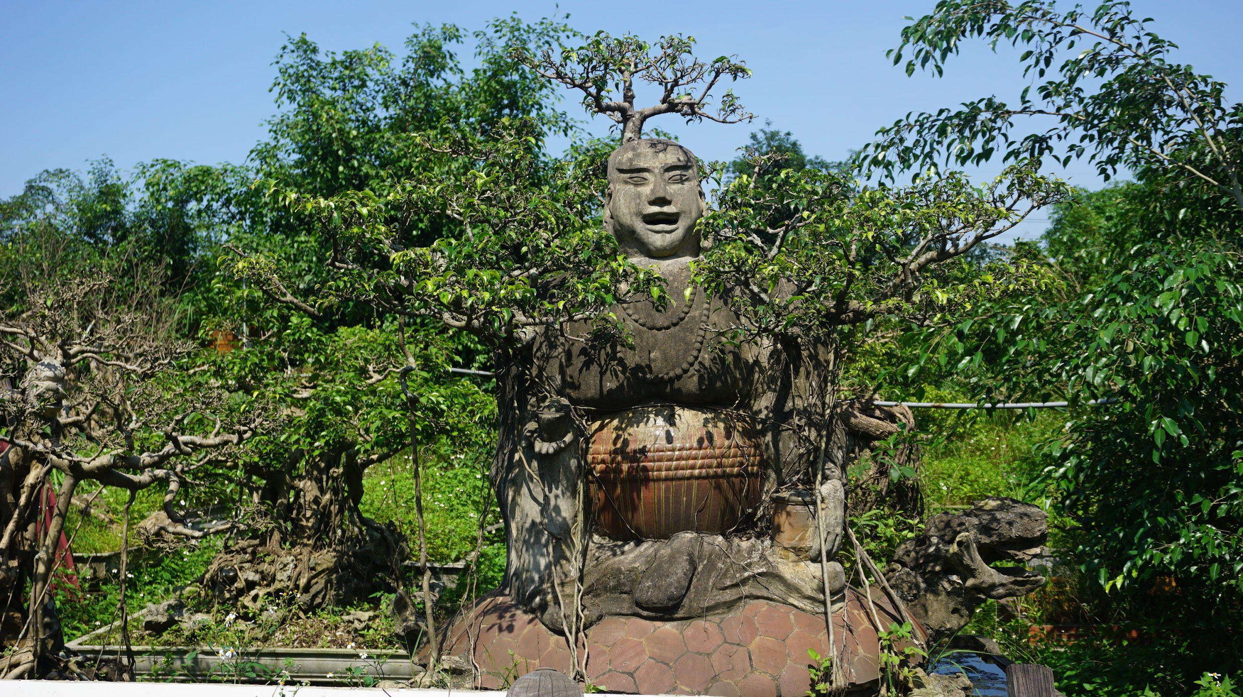 Khu vườn bỏ hoang toàn siêu cây bạc tỷ của đại gia nức tiếng một thời - 14