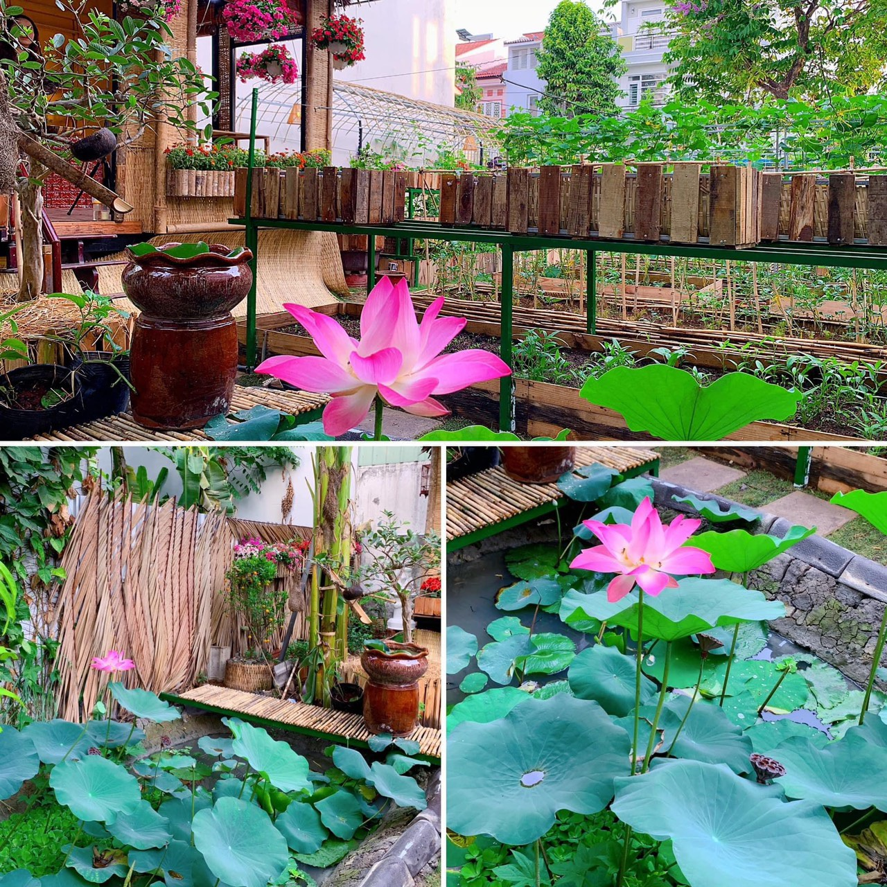 Bỏ 50 triệu đồng cải tạo vườn chuối thành khu sinh thái trong mơ - 6