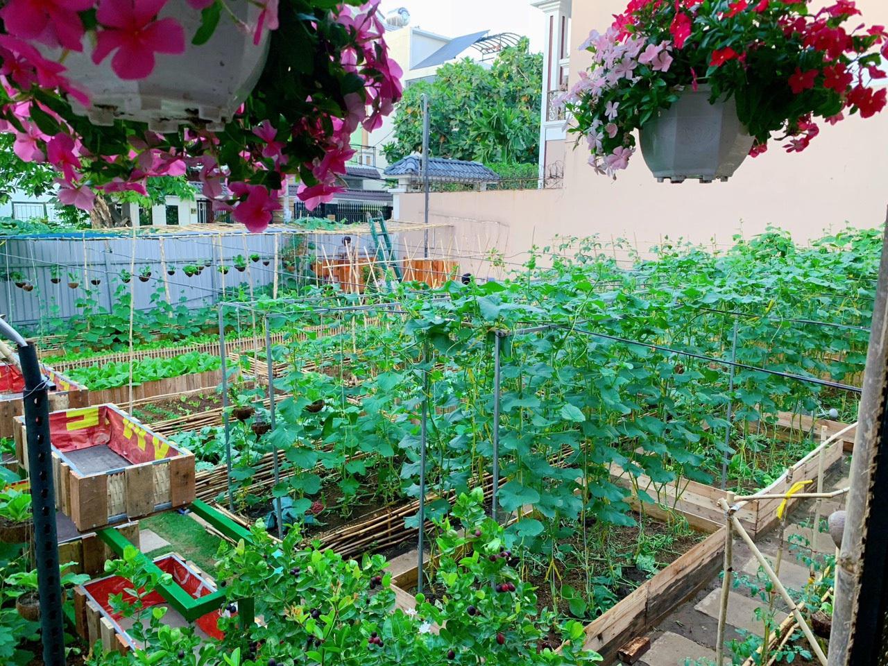 Bỏ 50 triệu đồng cải tạo vườn chuối thành khu sinh thái trong mơ - 3