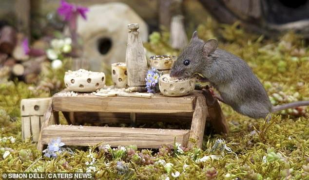 """Chiêm ngưỡng bộ ảnh gây sốt chụp """"ngôi làng của những chú chuột"""" - 7"""