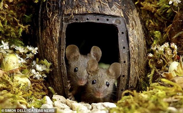 """Chiêm ngưỡng bộ ảnh gây sốt chụp """"ngôi làng của những chú chuột"""" - 1"""