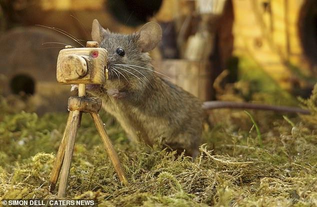 """Chiêm ngưỡng bộ ảnh gây sốt chụp """"ngôi làng của những chú chuột"""" - 8"""