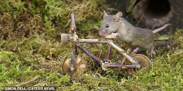 """Chiêm ngưỡng bộ ảnh gây sốt chụp """"ngôi làng của những chú chuột"""" - 13"""