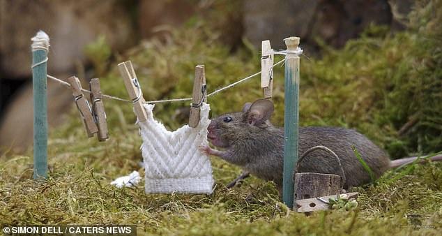 """Chiêm ngưỡng bộ ảnh gây sốt chụp """"ngôi làng của những chú chuột"""" - 14"""