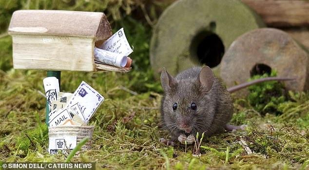 """Chiêm ngưỡng bộ ảnh gây sốt chụp """"ngôi làng của những chú chuột"""" - 16"""