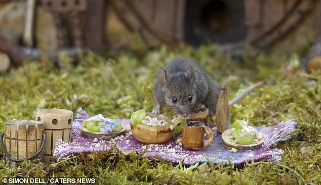 """Chiêm ngưỡng bộ ảnh gây sốt chụp """"ngôi làng của những chú chuột"""" - 15"""