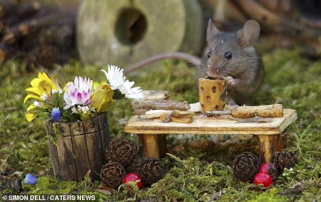 """Chiêm ngưỡng bộ ảnh gây sốt chụp """"ngôi làng của những chú chuột"""" - 9"""