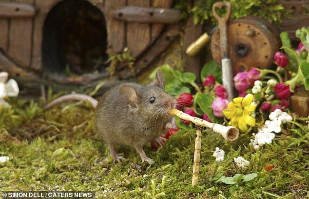 """Chiêm ngưỡng bộ ảnh gây sốt chụp """"ngôi làng của những chú chuột"""" - 6"""