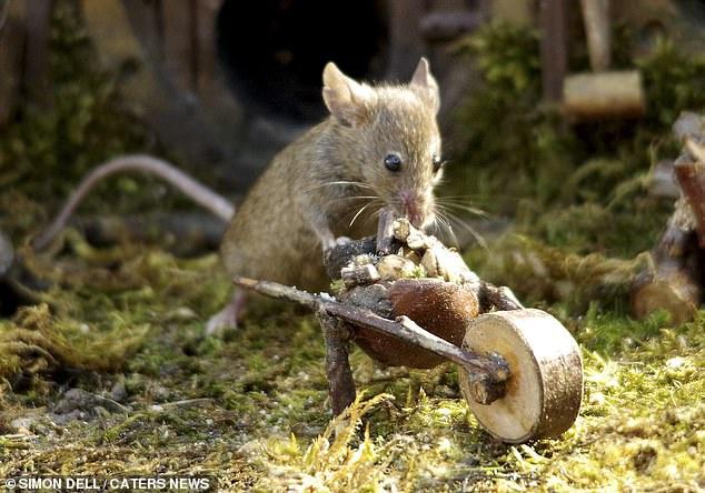 """Chiêm ngưỡng bộ ảnh gây sốt chụp """"ngôi làng của những chú chuột"""" - 10"""