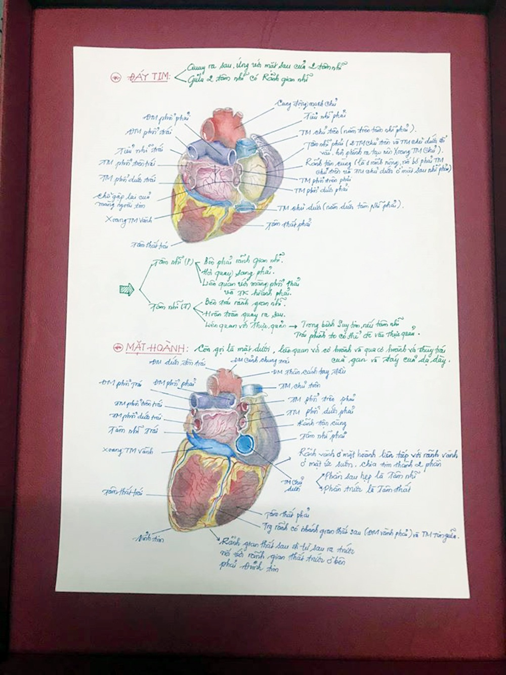 Nam sinh có biệt tài vẽ giải phẫu cơ thể người chi tiết khó tin - 10