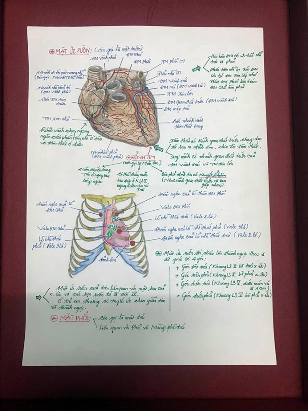 Nam sinh có biệt tài vẽ giải phẫu cơ thể người chi tiết khó tin - 11