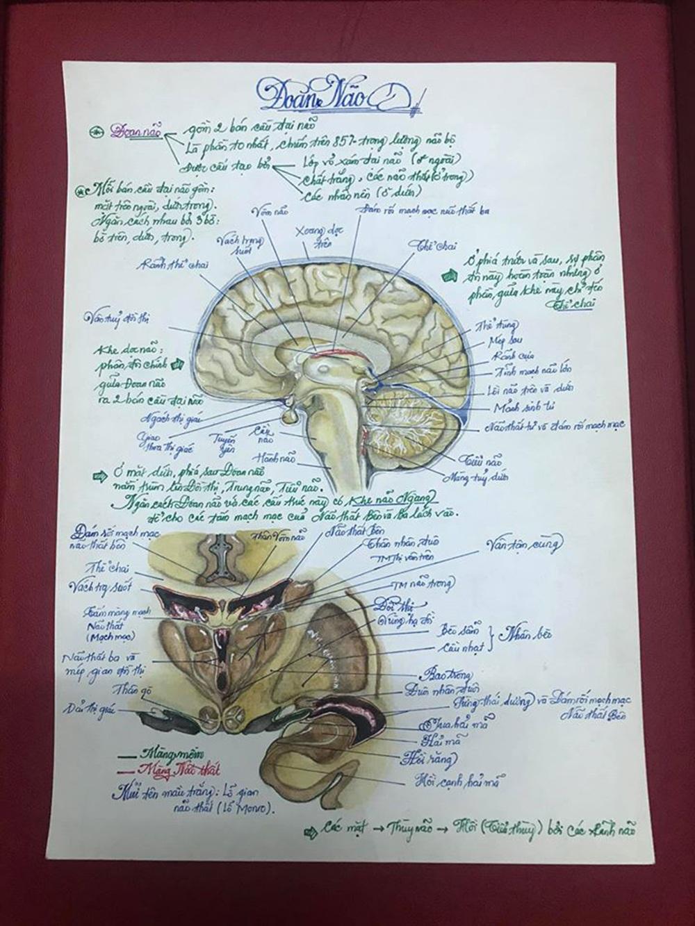 Nam sinh có biệt tài vẽ giải phẫu cơ thể người chi tiết khó tin - 7