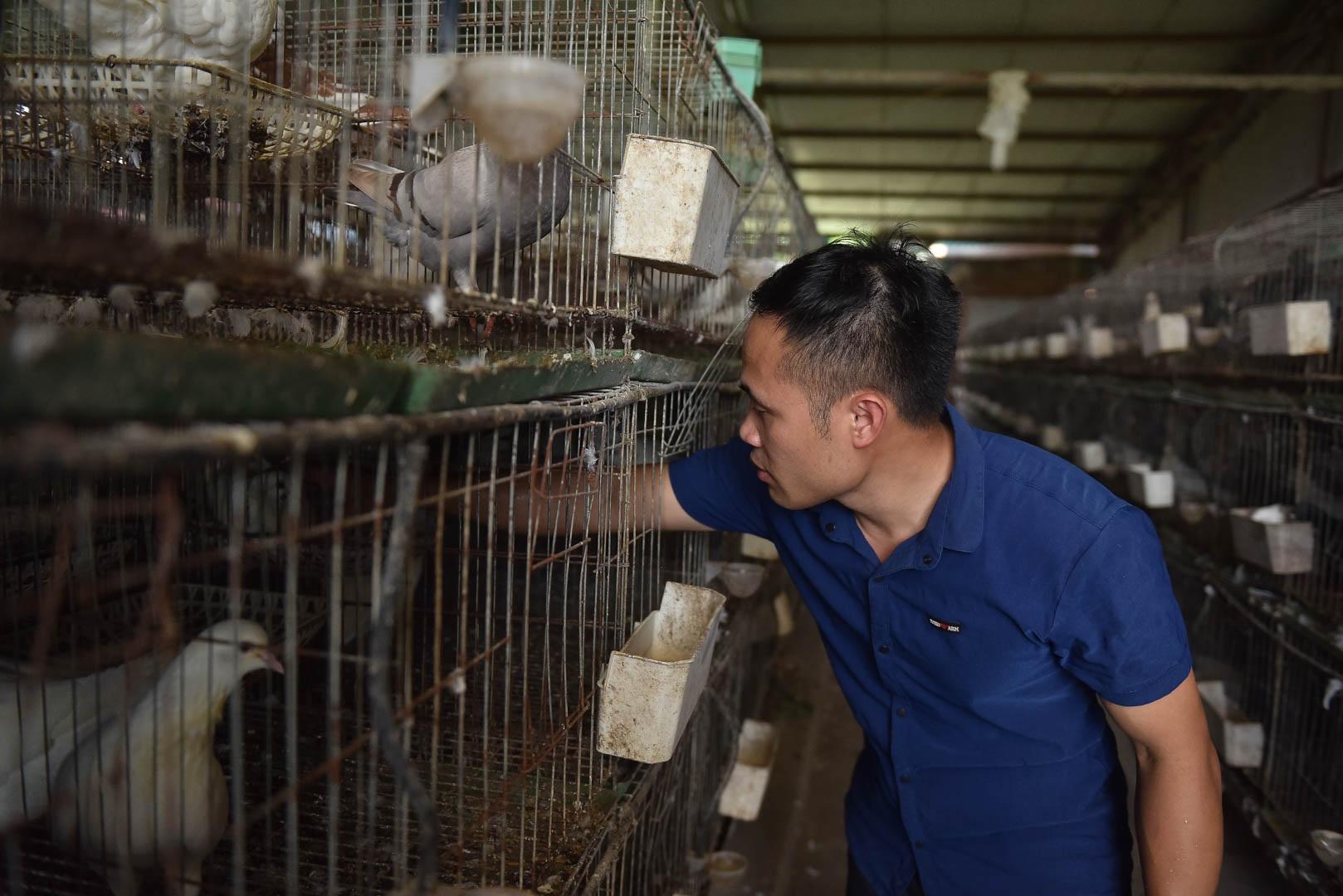 Bỏ nghề lập trình viên về làm nông dân nuôi chim thu 3 tỷ đồng/năm - 7