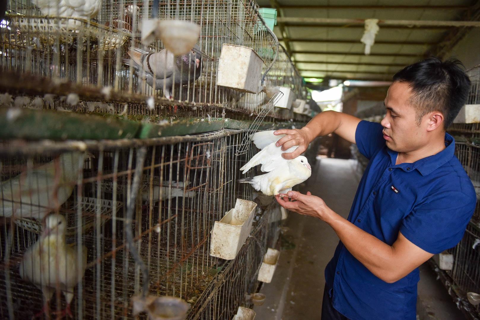 Bỏ nghề lập trình viên về làm nông dân nuôi chim thu 3 tỷ đồng/năm - 4