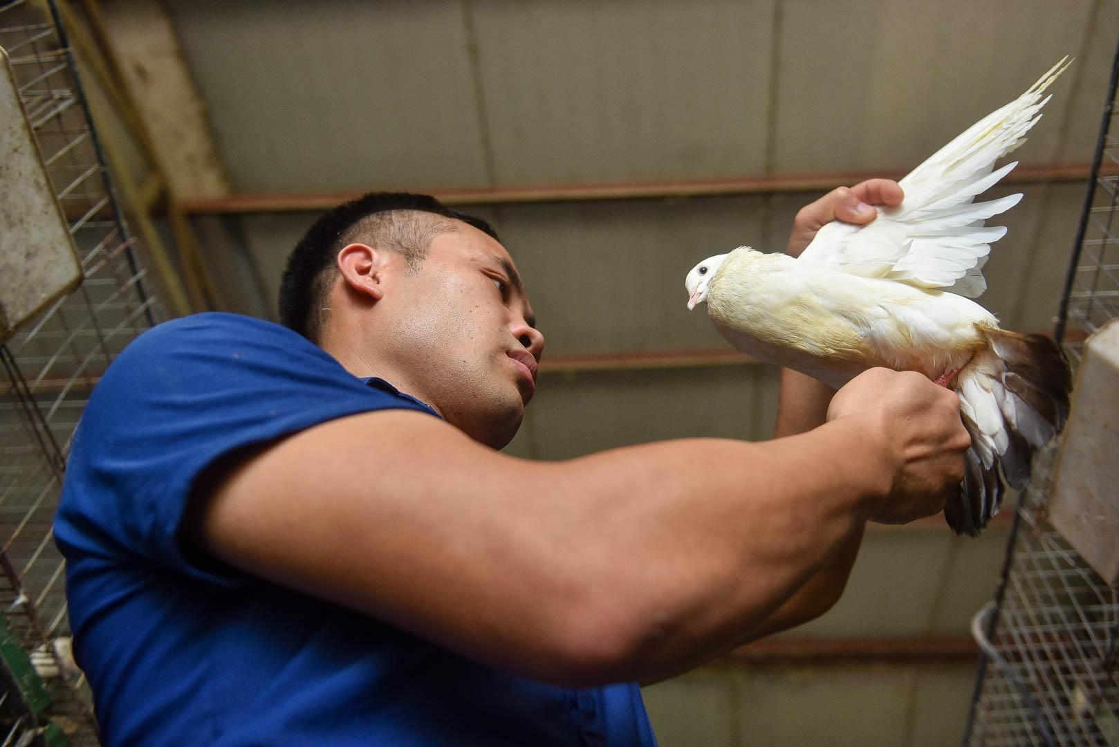 Bỏ nghề lập trình viên về làm nông dân nuôi chim thu 3 tỷ đồng/năm - 12