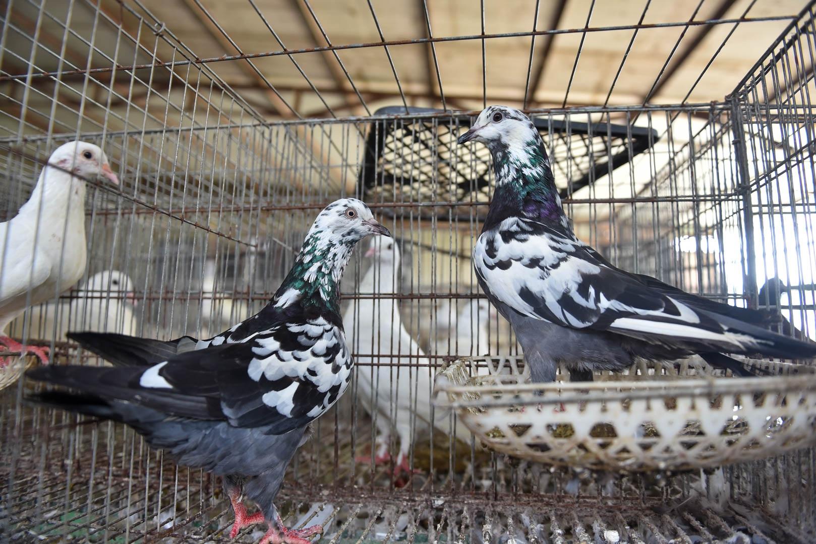 Bỏ nghề lập trình viên về làm nông dân nuôi chim thu 3 tỷ đồng/năm - 5