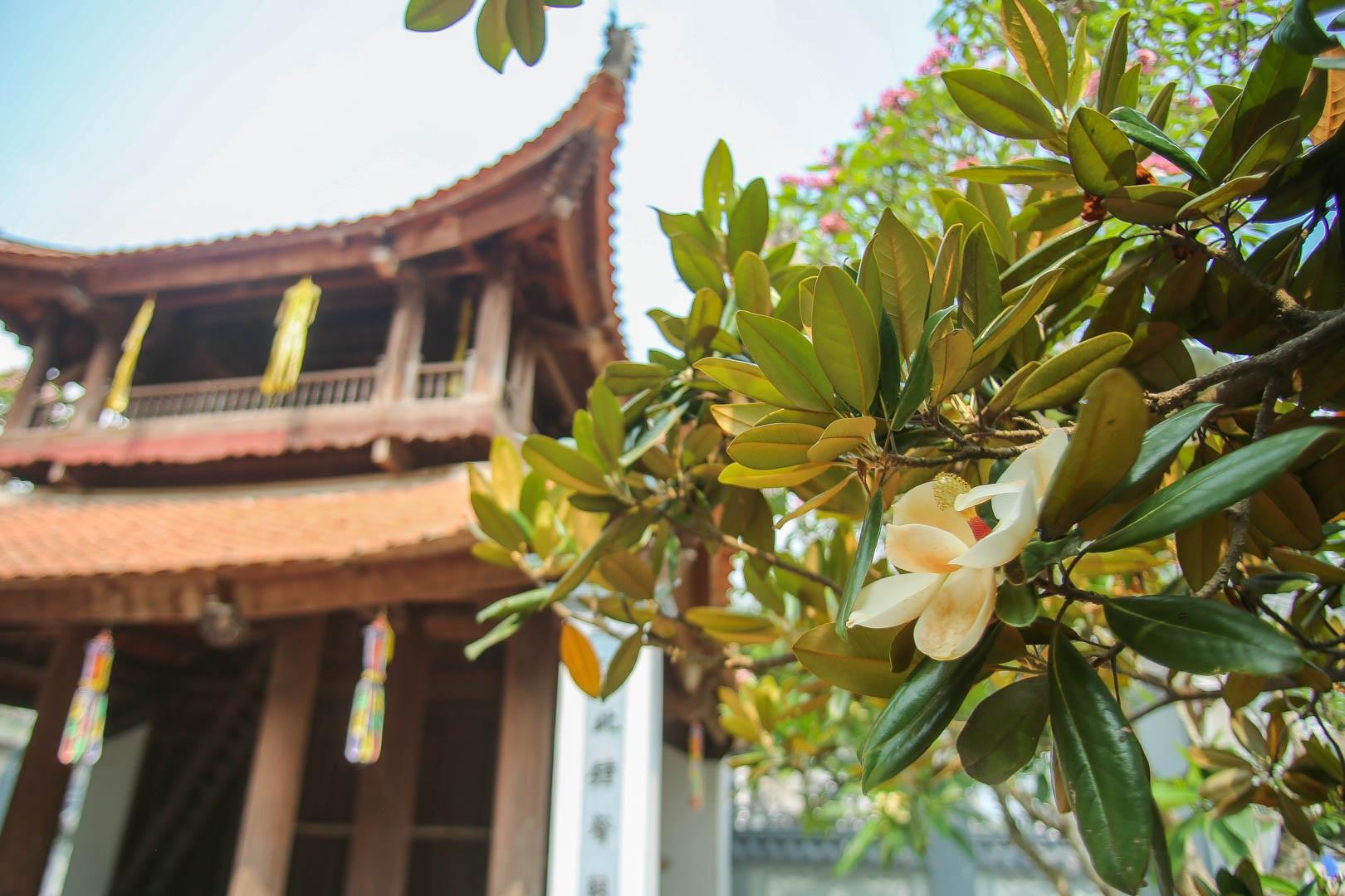 Kì lạ đóa sen nằm trên cạn, tỏa hương thơm ngát ngôi chùa trăm năm tuổi - 5