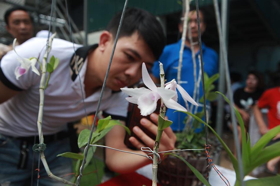 Chiêm ngưỡng những giỏ hoa lan đột biến hiếm có giá hàng trăm triệu - 6