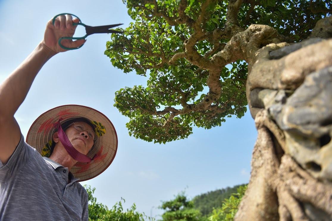 Chiêm ngưỡng nhà vườn toàn siêu cây bạc tỷ của ông vua cây cảnh - 9