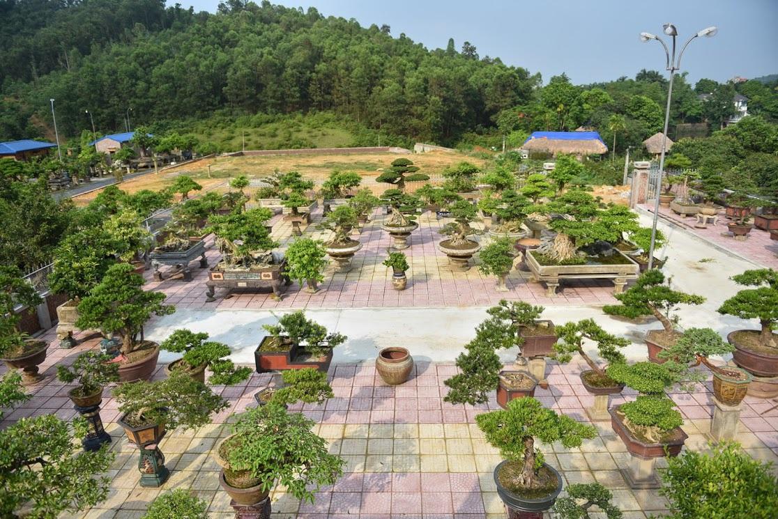 Chiêm ngưỡng nhà vườn toàn siêu cây bạc tỷ của ông vua cây cảnh - 4