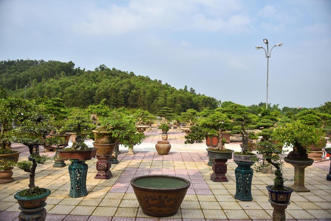 Chiêm ngưỡng nhà vườn toàn siêu cây bạc tỷ của ông vua cây cảnh - 11