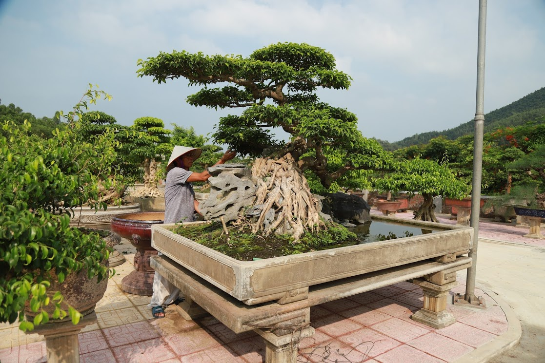 Chiêm ngưỡng nhà vườn toàn siêu cây bạc tỷ của ông vua cây cảnh - 6